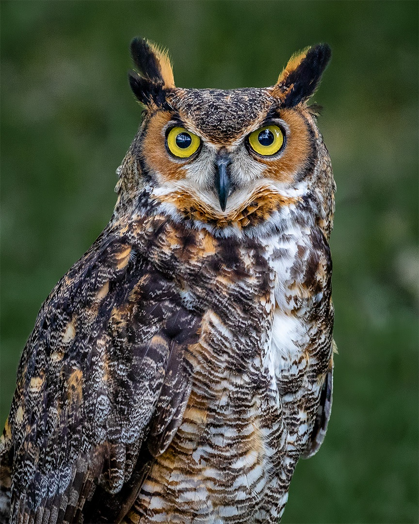 Skyhunters in Flight - Set 2 - Falcon, Owl, Owl near woods