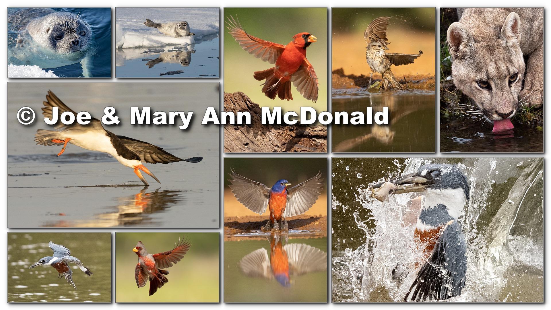 Joe & Mary Ann McDonald